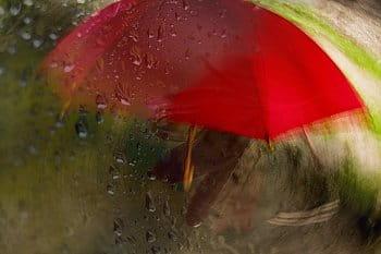 V daždi