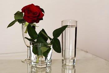 Zátiší s růží
