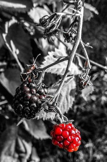Plody přírody