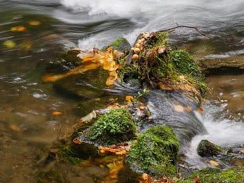 V proudu řeky