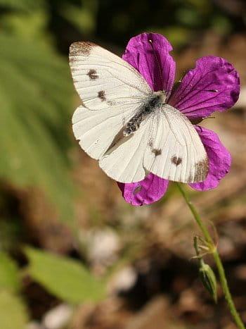 Motýl a květina v objetí.