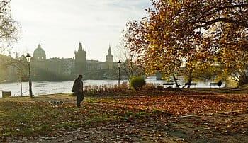 Ranní venčení u Vltavy