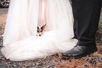 Podivná nevěsta