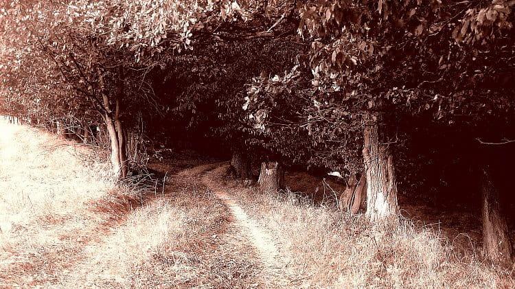 Un camino romántico
