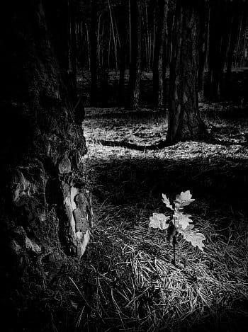 Nový život ve spáleném lese