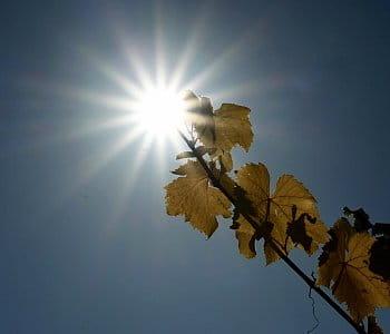 Slunce ve vinicich