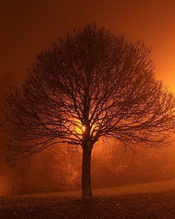Magický večerní strom