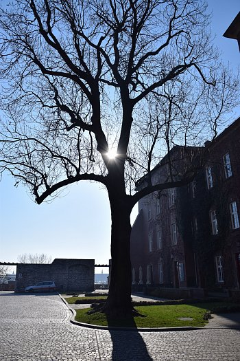 Strom Strašák