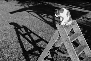 Kočičí ocásek
