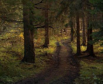 Cesta lesom