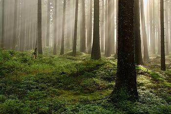 Lesní hry