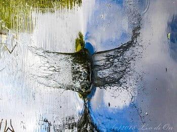 Vodní pták