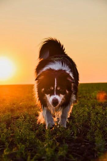 Lov při západu slunce