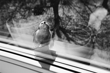 život s křídly
