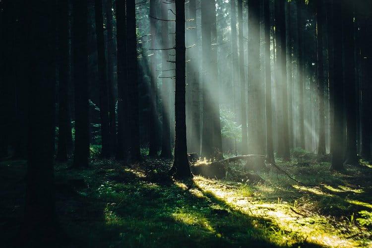 Lesní středovka