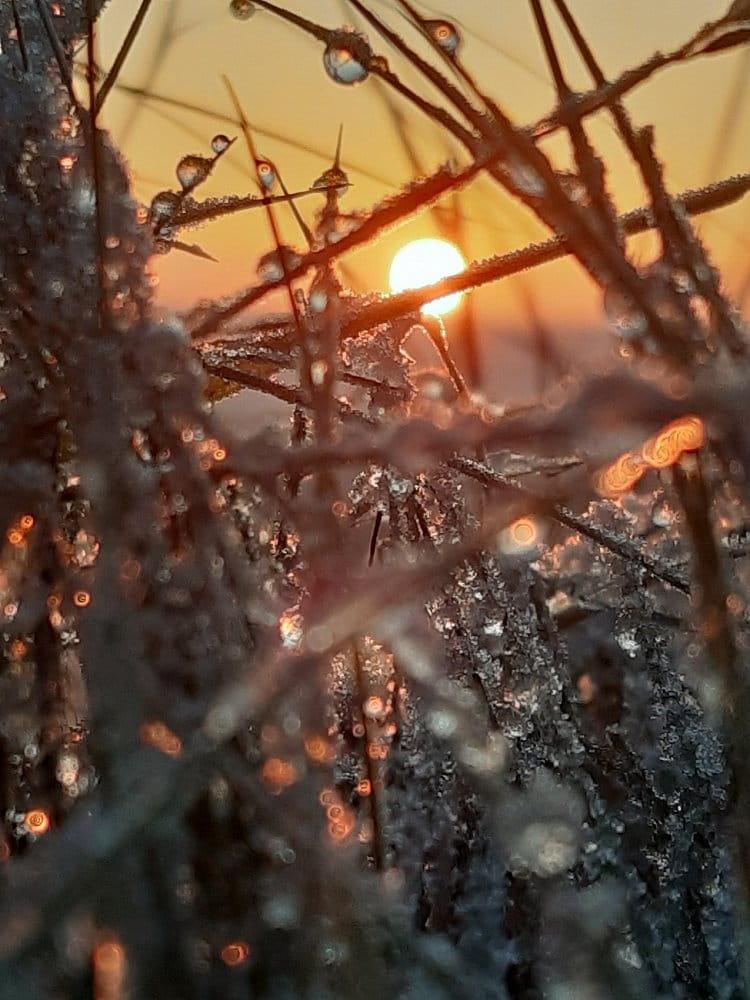 slunce a mráz