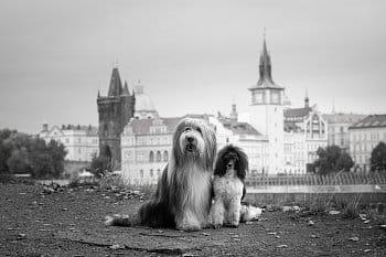 Psi v Praze