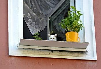 kočka v okně