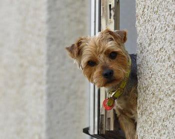 pes v okně