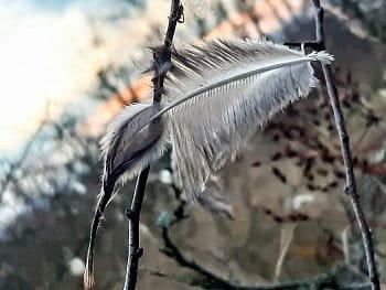 Jen peříčko či ptáček sám?