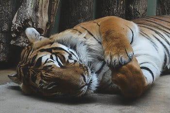 Ze Zoo III.