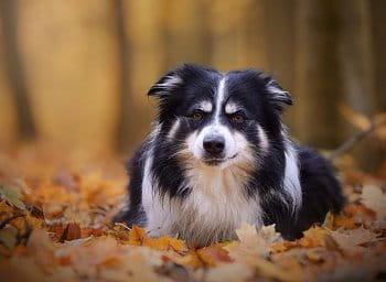 Lesní podzim