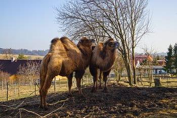 Moravská fauna