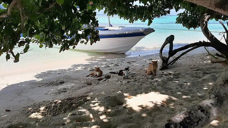 Kočičí ostrov