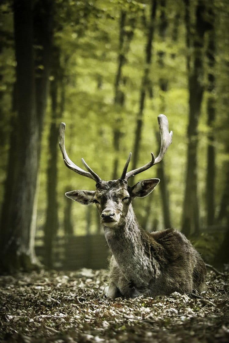 Lesní království