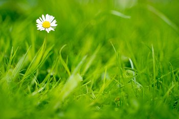 Něha v trávě