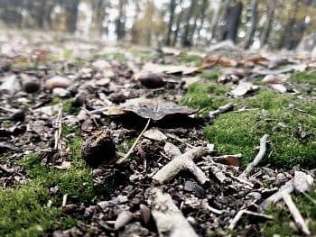 Les zblízka