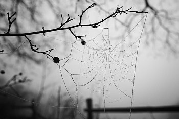 Pavučinka v mlžném lese