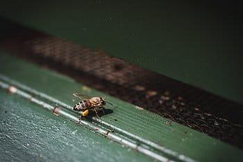 Včelka na úlu