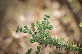 Subtropické rostliny