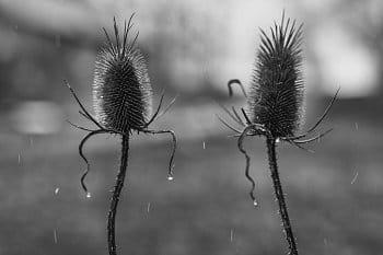 Pár, co tančí v dešti....