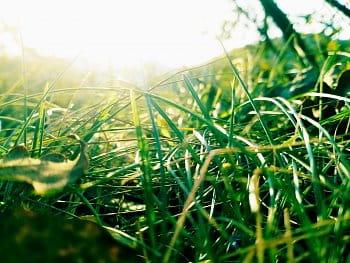 Schovaný v trávě