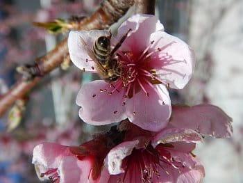 Květy jara