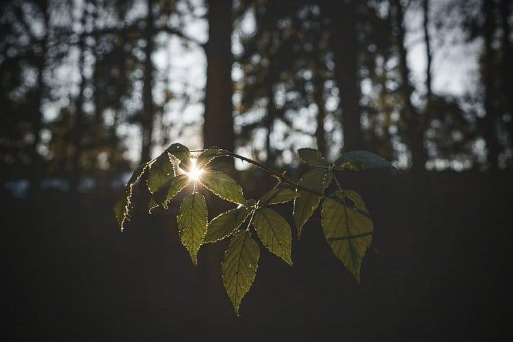 Světlo na konci dne