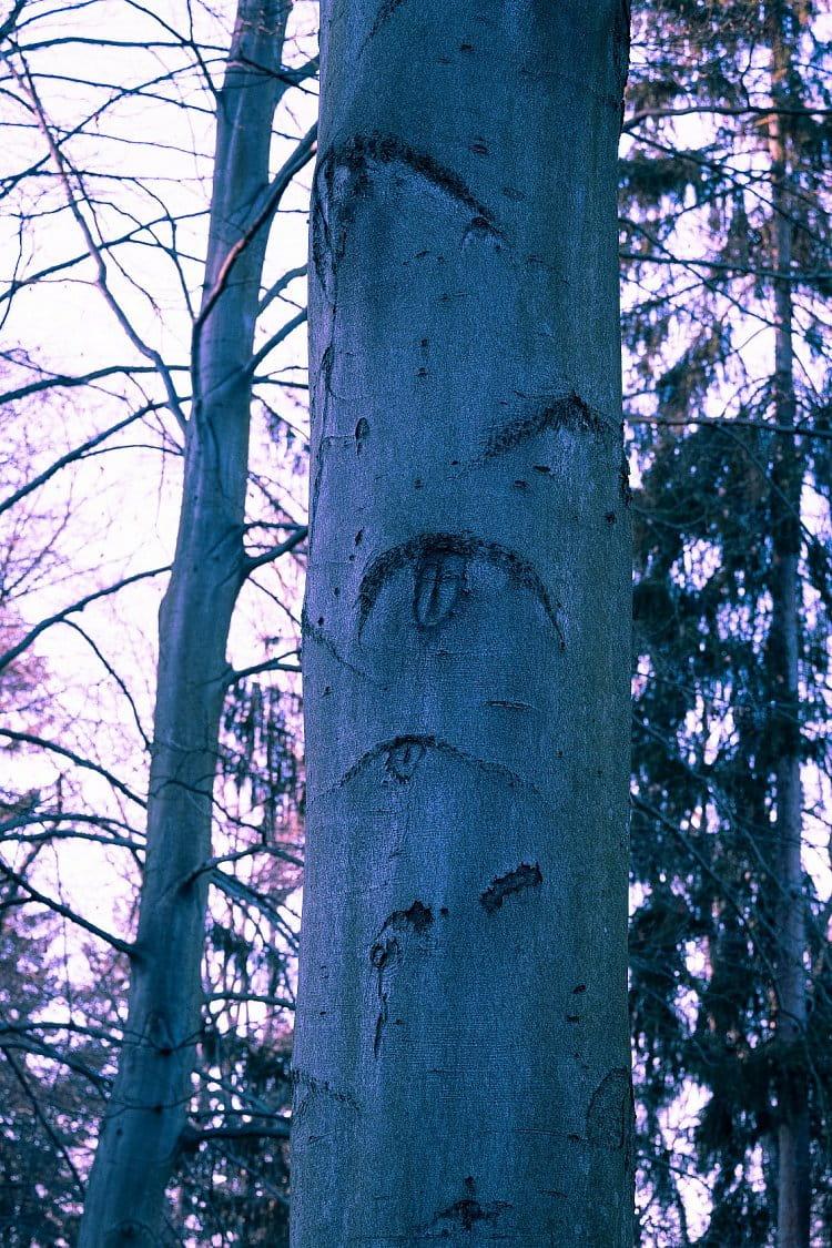Strom s očima