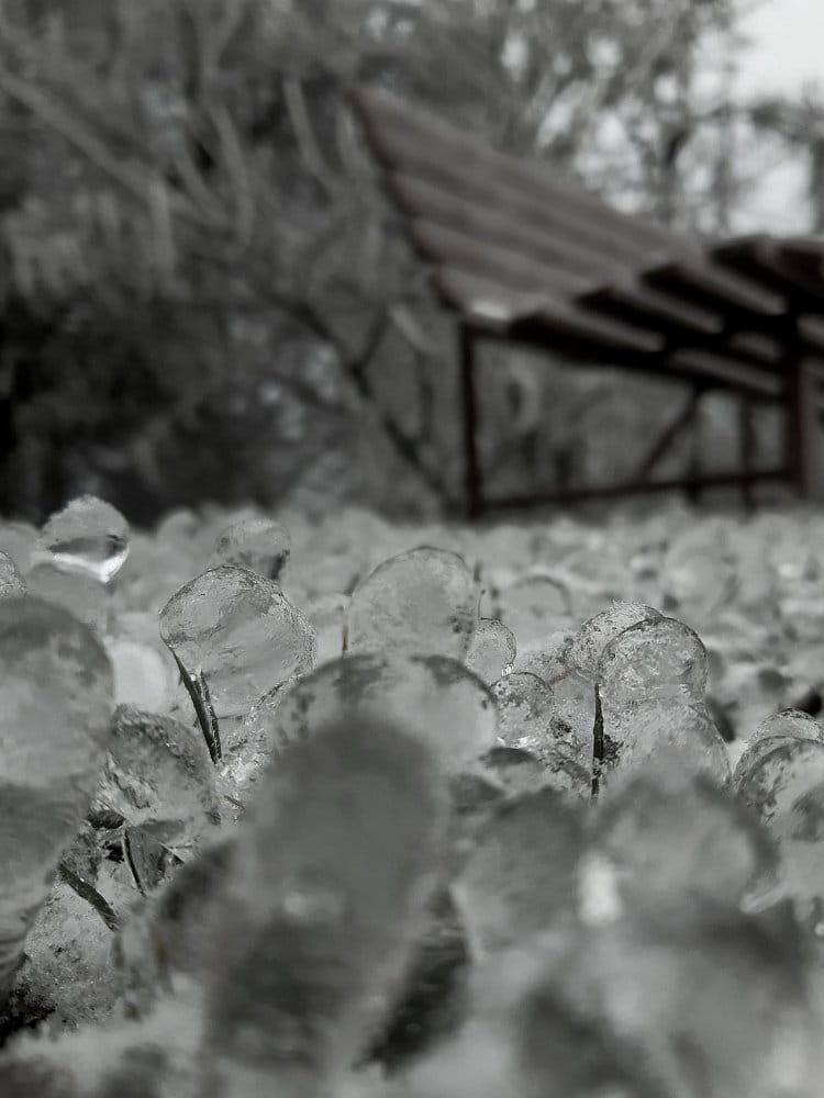červíci z ledu