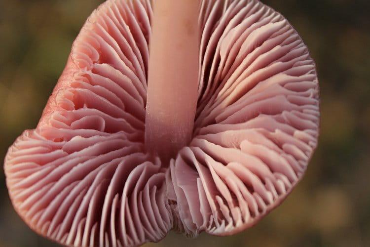 Detail houba