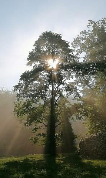 krásné ráno s andělem