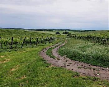 Mezi vinohrady