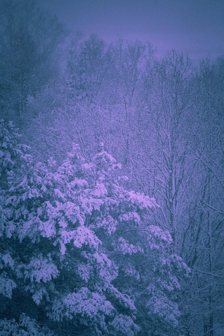 Krása zasněžené přírody