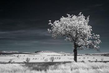 Strom a stromečky