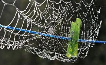 Když si pavouk pověsí pavučinu ...