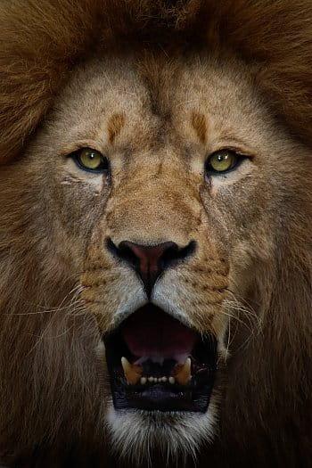 Tvář krále