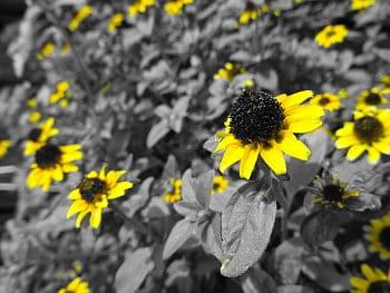 Žlutá zahrada