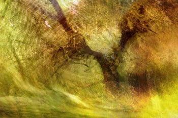 Z lesa radolesa